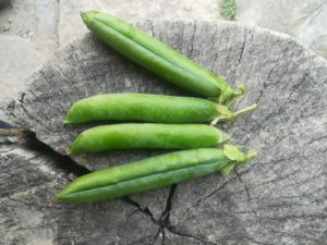 semillas huerto ecologico